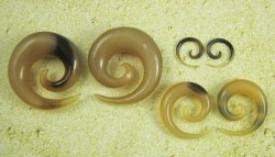 "Organic Golden Horn Spirals 1/2""-1"" (Pair) 12.5mm-25.5mm"